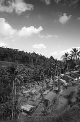 Rice Terraces (leonlee28) Tags: bali holiday indonesia landscape photography rice terraces monotone sud ubud paddies balinese indon blackandwithe raice subak tegallalang leonlee28 leonlee tegallalangriceterraces rsimarkanduya