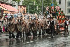 20 Sep 2014. Mnchen, Germany. G & S Wagon (The UberSteve) Tags: germany munich mnchen festivals parades oktoberfest muenchen canon5dmkiii