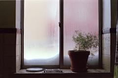 DS161119094106 (dmacfoto) Tags: film 35mm expired portra fujica pink sunset takumar