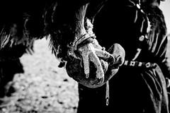 .Talons. (Shirren Lim) Tags: eagle mongolia monochrome portrait winter kazakh tribe hunting blackandwhite animal landscape
