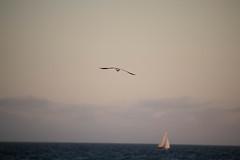 The SINGLE BIRD The SINGLE BOAT (Piseth Srun) Tags: seagle boat beach evening night melbourne australia sea water ocan lonely