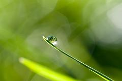Water drop (Susanne Hjertø Wiik) Tags: naturlandskapnaturfenomen norge steder tingfenomen vær dugg geitmyra høst oslo skolehagen vanndråper årstid