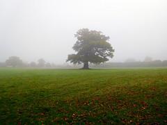 Misty morning (davej1962) Tags: autumn powys breconbeacons uskvalley llangattock
