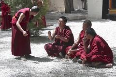 Monks debating (svik7) Tags: china tibet monastery monks 中国 lhasa debates sera 西藏 2014 拉萨 色拉寺