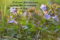 Psalm 69:30-31a (Sapphire Dream Photography) Tags: life flowers inspiration flower love church gra