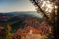 Bryce Sunrise (Dominik Kisskalt) Tags: park usa sun tree utah ut desert canyon national bryce rise sonnenaufgang baum wste sunstar
