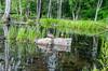 Nzharvest14 (3 of 9) (fotkimoi) Tags: edward benjamin yulka peaksisland