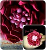 """...that which we call a rose by any other name would smell as sweet...""   ""...la rosa no dejaria de ser rosa, tampoco dejaria de esparcir su aroma, aunque se llamara de otra manera...""  ""...quella che chiamiamo rosa,pur con un altro nome, avrebbe lo stes (fioridoriente) Tags: flowers red flores flower fleur fashion rose japan fleurs rojo handmade flor rosa style shakespeare passion bara fiori satin fiore rosso giappone japaneseculture passione kanzashi japanesefashion hanakanzashi fioridoriente"