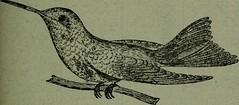 Anglų lietuvių žodynas. Žodis capitonidae reiškia <li>capitonidae</li> lietuviškai.