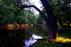 Passaic River  Summer 2014(83) (rverc) Tags: wetlands passaicriver livingstonnewjersey