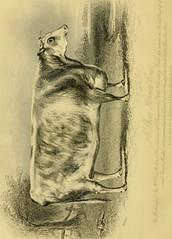 Anglų lietuvių žodynas. Žodis self-raker reiškia savarankiškai raker lietuviškai.