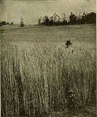 Anglų lietuvių žodynas. Žodis smut fungus reiškia rūdis grybelio lietuviškai.