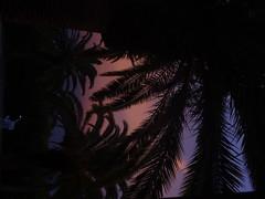 Twilight on Alligator Creek 1  - Gulf of Mexico (ashabot) Tags: sunset sky gulfofmexico nature twilight florida silhouettes palmtrees lightanddark gulfcoast