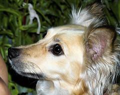 Mi Mascota. (jagar41_ Juan Antonio) Tags: perros perro mascotas mascota animales