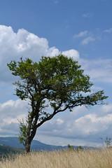 Tree (sukejnaj) Tags: summer tree nature landscape photo nikon skies saturday d3100