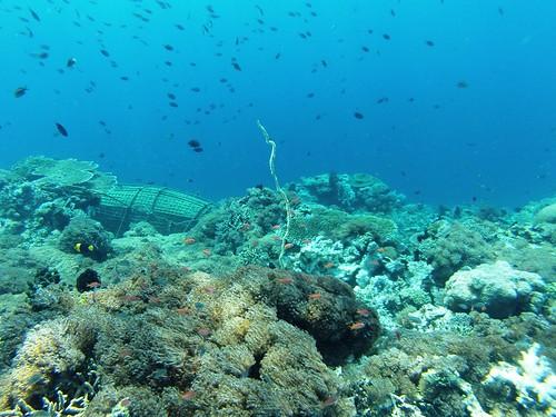 Underwater Kepa Island