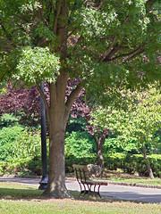 P9100112 (Paul Henegan) Tags: trees bench shadows lamppost f40 hbm mamiyasekoref128f135mmsn10455