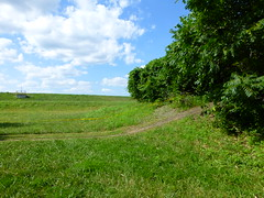 Mountain Bike Trail at Meramec Landing Park or Meramec Levee Recreation Park in Valley Park, MO_P1320508 (Wampa-One) Tags: sky green glass clouds greenglass mountainbiketrail valleyparkmo merameclandingpark meramecleveerecreationpark