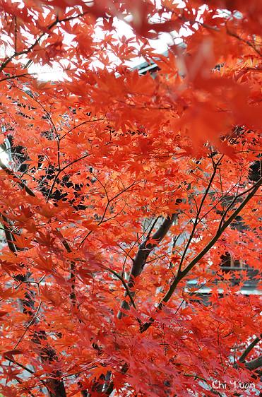 清涼寺10_nEO_IMG.jpg