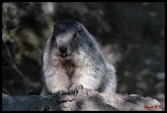 Il Sorriso (Sigma SD1, Foveon) (BeSigma) Tags: parco zoo sigma natura 28 francia 70200 animali vacanze lourdes merrill foveon sd1