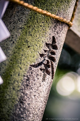2014_09_13_Fuchu_SakeFestival_019_HD (Nigal Raymond) Tags: japan tokyo sake   fuchu    100tokyo cooljapan nigalraymond wwwnigalraymondcom  kunitamashrine  2014