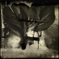 Produc(ed)-9838 (Poetic Medium) Tags: square stilllife produce organic kitcamghostbird blender 6x6 ipod food