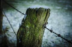""""""" Last snow """" (Kalbonsai) Tags: prikkeldraad natur naturshot paal alg green groen bokeh wiese gemany nikon d5100 1685mm macro"""