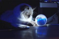 Pebby ile evcil hayvanınızla her daim iletişimde kalın (Teknoformat) Tags: evcilhayvan kickstarter oyuncak robot