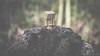 Scorched (#Weybridge Photographer) Tags: adobe lightroom canon eos dslr slr mk ii mkii danbo danboard kiyohiko azuma manga cardboard box amazon robot character figure scorch scorched burn burned wood tree