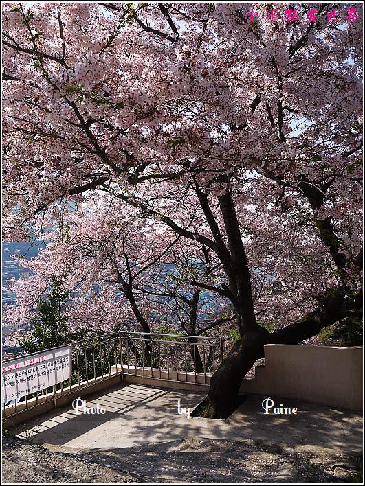 釜山甘川洞 (64).JPG