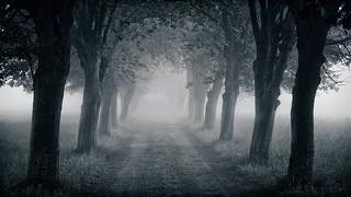 Black Hole Avenue