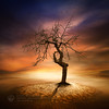 Lonely (Piotr.Krol) Tags: tree art piotr creative poland lonely krol baxteria truthandillusion bacx