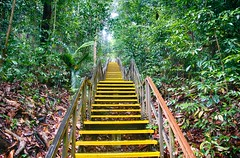 The vision (Eustaquio Santimano) Tags: tree stairs singapore walk top vision stare vance macritchie happyday havner ohahappyday