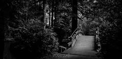 Jardin japonais, Ile de Versailles, Nantes (CREEPING FUCKING DEATH) Tags: nature canon noir jardin bretagne breizh blanc nantes 44 creeping bzh naoned 1740mml canon7d