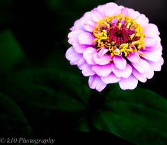 071914-16 (k10Photography) Tags: flowers black colors contrast high background darkened