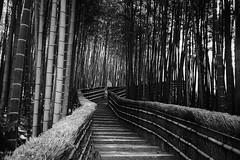 Untitled (richardhwc) Tags: blackandwhite film japan kyoto pentax fujifilm neopan400 uc1 32mmf35