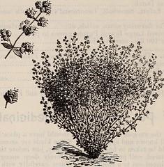 Anglų lietuvių žodynas. Žodis artemisia vulgaris reiškia <li>artemisia vulgaris</li> lietuviškai.