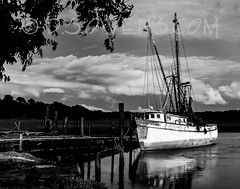 DIANIE (MIND'S EYE PHOTOGRAPHY BY- D.S.Owens) Tags: blackwhite southcarolina charleston outback hiltonhead dsowens mindseyephotography placestags eventstags