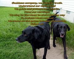 dog black dogs graphics lab poem message text large retriever spirituality mixedbreed spiritguide animaltotem