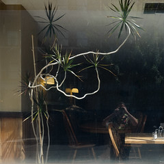 Café Window, First Hill, Seattle (Blinking Charlie) Tags: seattle usa selfportrait reflection window café autoretrato madagascardragontree washingtonstate selfie 2014 firsthill dracaenamarginata terryavenue blinkingcharlie fujifilmxe1