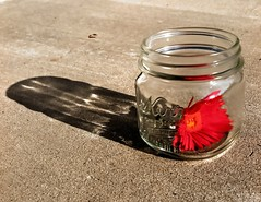 Captured Without a Lid (poem below) (Mertonian) Tags: life pink red wild abstract glass shadows gray cement captured clear daisy jar wildflower without kerr lid shadesofgray mertonian robertcowlishaw canonpowershotg1xmarkii capturedwithoutalid monkofthewestdesertcom