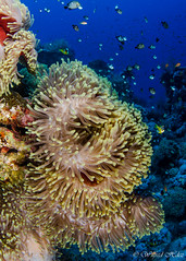_WHP2307.jpg (Wilfred_Hdez) Tags: underwater redsea wideangle places