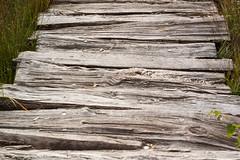 Tister Bauernmoor [06] (Canon 500D, Pentacon 50mm F-1.8 auto M42) (baumbaTz) Tags: wood canon germany deutschland 50mm path september swamp m42 pentacon dslr moor holz pfad 2014 niedersachsen lowersaxony 500d tiste canon500d sittensen moorholz swampwood rebelt1i kissx3 tisterbauernmoor 20140906