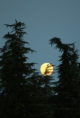 #fullmoon #luna #moon #sky #bird #tree #gz (Gz_) Tags: sky moon tree bird luna fullmoon gz