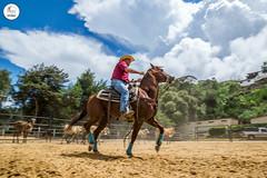 DSC08661 (J.M. Stelluti) Tags: horse club de caballos los venezuela campo ganado miranda teques vaqueros couching llaneros arrear stelluti photoluxes