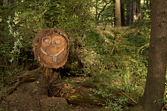 9590 Log Smiley Face (eyepiphany) Tags: beach log beaches fallentree fallenlog smileyface oldgrowth deforestation piratescove oregonbeaches shortsandbeach oldgrowthtrail timbergraffiti