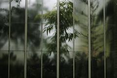 GREEN (karinyamasaki) Tags: trees windows green nature greenhouse