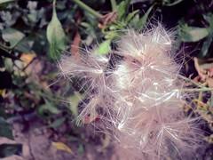 September (Rody M) Tags: life autumn light leaves bright september fragile