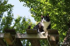 Chat noir dans le jardin