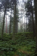 Fog in the Forest,Tyrebagger_sep 14_i56 (Alan Longmuir.) Tags: fog aberdeenshire grampian tyrebagger fogintheforest clintertywood